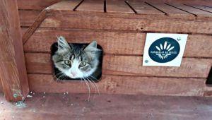 Sokak kedilerine sıcak yuva