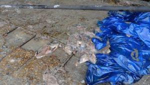 Aksoy, Çevre Katliamına 'Dur' Dedi