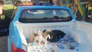 Dört yavru köpek hayata döndü