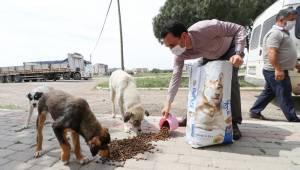 Bergama'da sokak hayvanları unutulmuyor
