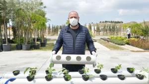 Çiğli'de balkonlarda topraksız tarıma destek