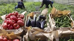 Ata Tohumlarından Üretilen Sebzeler Vatandaşlarla Buluşuyor