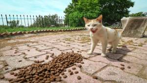 Bergama Belediyesi Sokak Hayvanlarına Sahip Çıktı