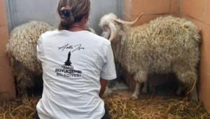 Büyükşehir Tarsus'a 57 yaban hayvanı gönderdi
