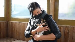 Dünya Kediler Günü'nde Buca'nın kedi raporu