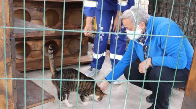 Deniz'in hatırası Kedi Evi'nde yaşayacak
