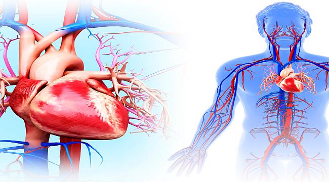 Kalp Ve Damar Sağlığını Korumak Elimizde