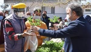 Üreticilere ücretsiz sebze fidesi