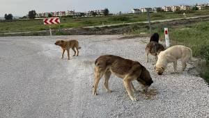 Çiğli'de Sokak Sakinleri Tam Kapanma Sürecinde Belediyeye Emanet