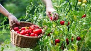 Meyve sebze sektörü hedef büyüttü